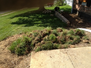 All the grass I dug up!