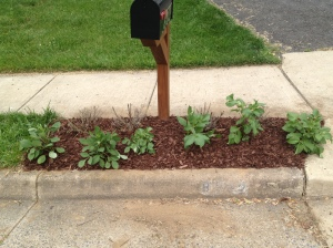 Our silly mailbox flower bed...it is a work in progress